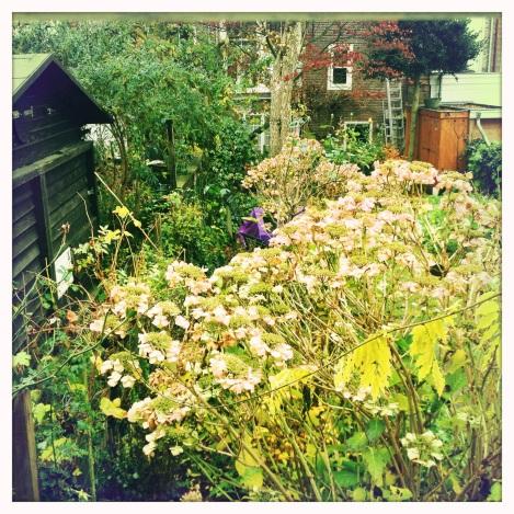 garden house 11